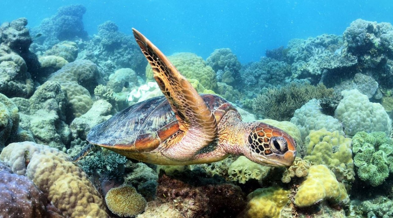 Referral-Dive-Course-Great-Barrier-Reef-Turtle-1260x700